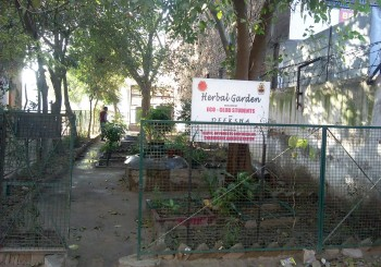 School Herbal Garden by Eco-Club.